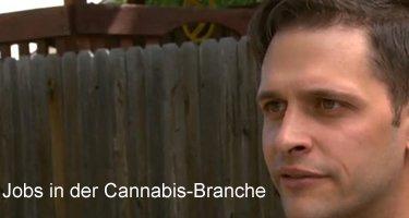 Cannabis-Branche