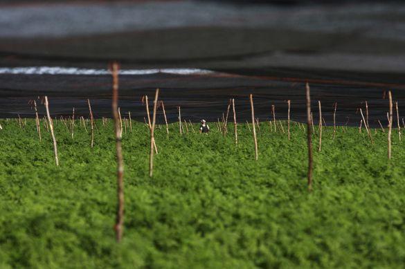 Inspektion einer Cannabis Plantage