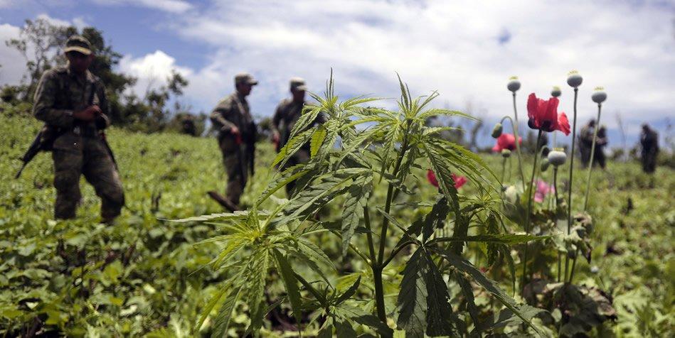 Cannabis- und Mohnfeld in Mexiko