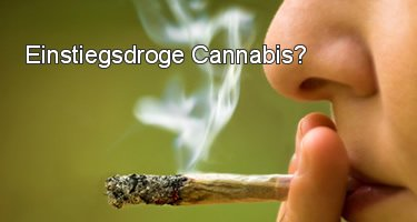 Einstiegsdroge Cannabis