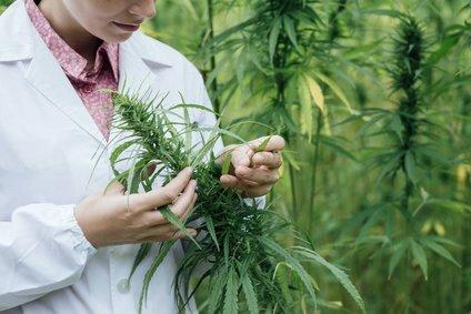 US-Gesundheitsministerium: Cannabis kann Krebs heilen