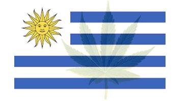 Cannabis in Uruguay: der Wettkampf um die Belieferung der Apotheken