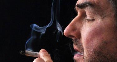 Albanien: mehr als 650.000 Cannabis-Pflanzen vernichtet