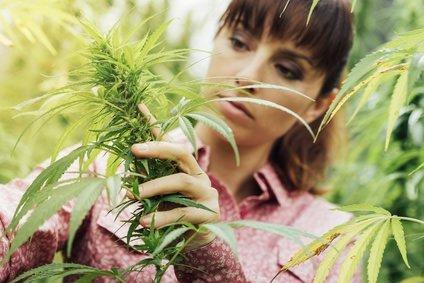 Cannabis Genussmittel