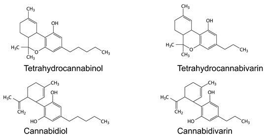 Cannabinoide in flüssiger Reinkultur