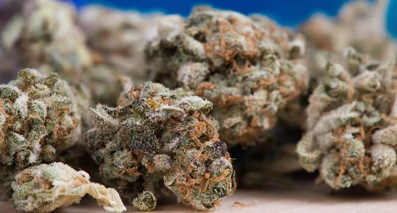 Grundlagen der Cannabis-Küche