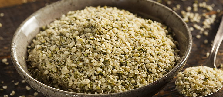 Legalisierung von Cannabis würde den nachhaltigen Hanfanbau fördern