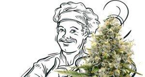 Grundlagen Cannabis Küche