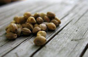 Nahrhafte Hanf Samen