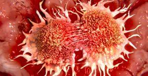 Zellen