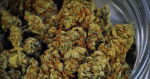 Verkauf von Cannabis weiterhin auf Erfolgskurs