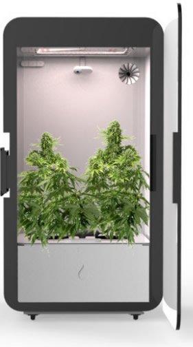 Cannabis Anbau leicht gemacht - Leaf als