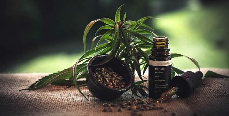 CBD-Öl Heilsames aus der Cannabispflanze