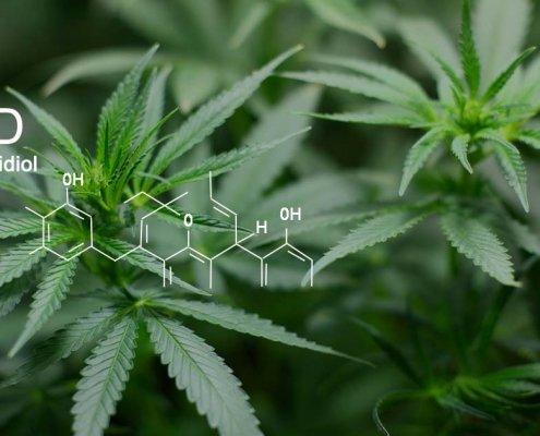 CBD-Öl: Heilsames aus der Cannabispflanze