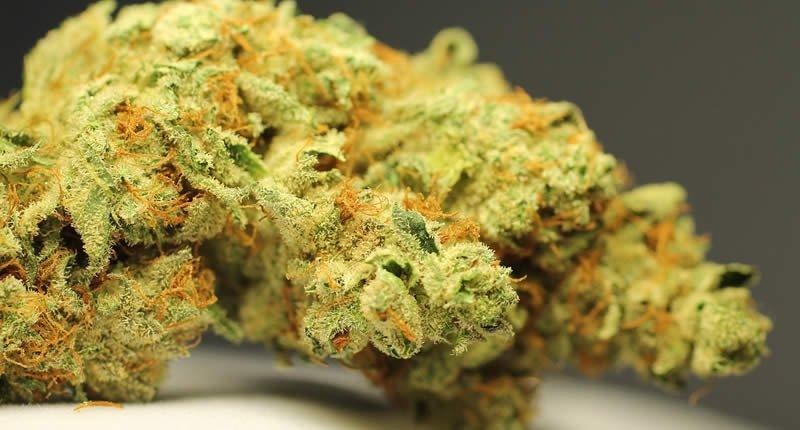1×1 der Cannabis Küche