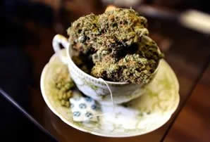 Cannabis Tee mit THC