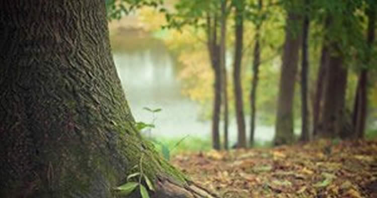 Hanf rettet die Wälder und ist nachhaltig für das Ökosystem