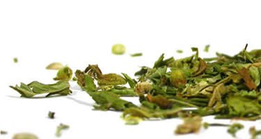 Hanf Tee jahrhundertealter, heilsamer Zaubertrank