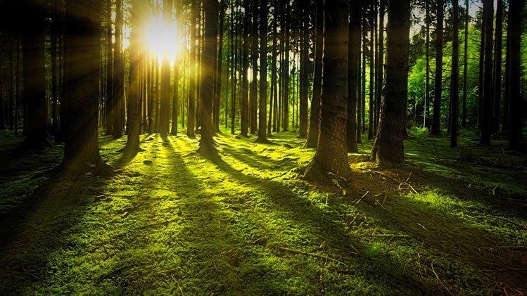 Artenvielfalt im Wald erhalten