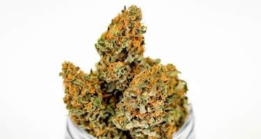 SPD fordert legales Marihuana