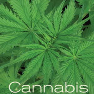 Cannabis: Evolution and Ethnobotany [Gebundene Ausgabe]