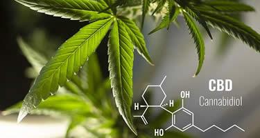 CBD Dosierung - die richtige Menge