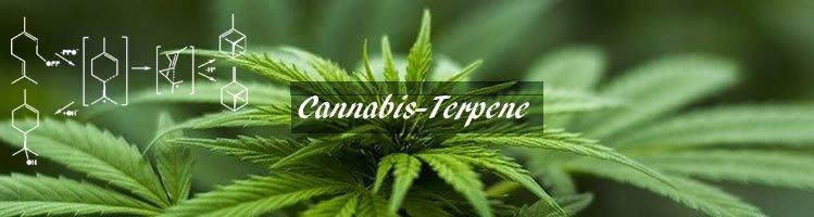 Cannabis-Terpene