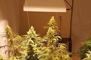 Grow-Zelte